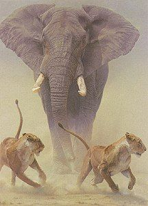 DES ELEPHANTS